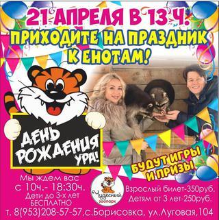 День рождения енотов