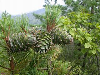 «Охрана природных богатств на территории УГО»