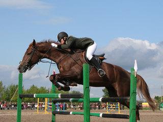 Открытое первенство по конному спорту