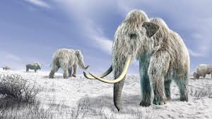 «Гиганты ледникового периода»
