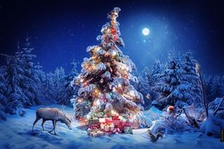 «Новогодний лес - место для чудес!»