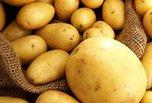 В Уссурийске ввели карантин из-за нового для Приморья заболевания картофеля