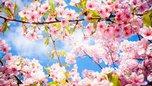 В период майских праздников в Уссурийске будут усилены меры безопасности