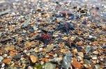 69 пляжей и бассейнов безопасны для отдыха в Приморье