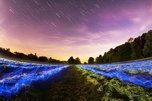 100 метеоров в час: приморцы увидят самый красивый звездопад года