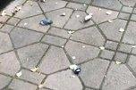 Специалисты объяснили, почему город завален мертвыми птицами