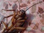 В Уссурийске школьников кормят блюдами с тараканами