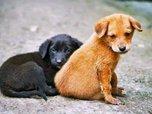 В Уссурийске за последний месяц отловлено 69 безнадзорных животных