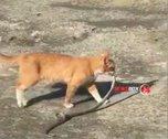 Кот-змеелов из  Большого Камня собрал 100 тысяч просмотров в Инстаграм