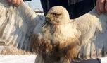 В Уссурийске сотрудники транспортной полиции спасли от гибели на рельсах редкую дикую птицу