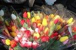 Ярмарка цветов открылась в Уссурийске