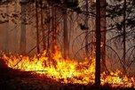 В Уссурийске действует противопожарный режим