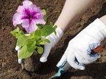 Более 150 тысяч однолетних цветов высадят на клумбы Уссурийска до конца июня
