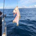 «Полтела отгрызла»: последствия нападения акулы показали в Приморье