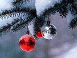 Новогоднюю красавицу в этом году можно будет купить от 600 до 2000 рублей