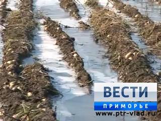 Сильный мороз окончательно убил надежды приморских фермеров спасти урожай