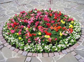 Вопросы по озеленению города обсудили в Уссурийске