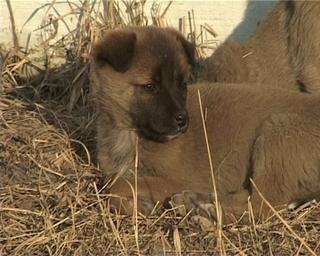 Бродячие собаки убрались из детского сада, чтобы  терроризировать соседских жителей