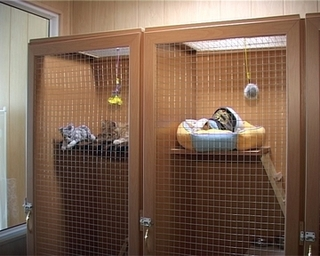 Избавить животное от новогоднего стресса помогут в зоогостинице