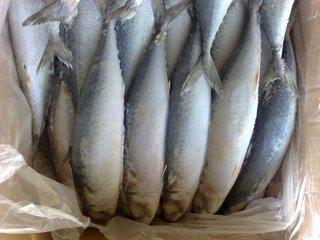 Свыше полутора тонн просроченной селедки обнаружено в Уссурийске