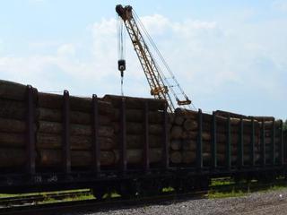 Незадекларированный пиловочник дуба выявили уссурийские таможенники
