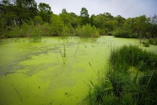 Многодетные семьи Уссурийска жалуются на выделенную бесплатную землю на болоте