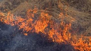 Площадь лесных пожаров в Приморье за сутки увеличилась почти вдвое