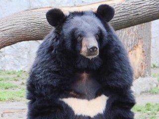 Министр природы разберётся в убийстве медведей из Дубового ключа УГО