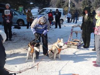 Собачьи упряжки соревновались в скорости в селе Каменушка под Уссурийском