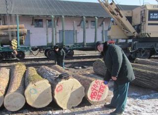 Уссурийские таможенники выявили нарушения при экспорте леса