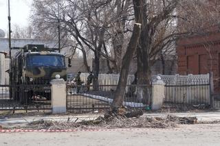 Деревья в Уссурийске безжалостно обрезают