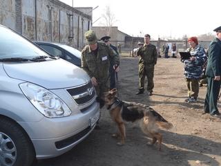 Собаки искали наркотики на территории воинской части в Уссурийске
