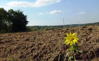Предприниматель уничтожил 7000 метров плодородной земли под Уссурийском