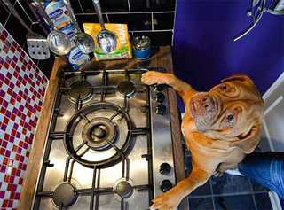 Собака, решившая поесть ночью пирог, едва не сожгла весь дом
