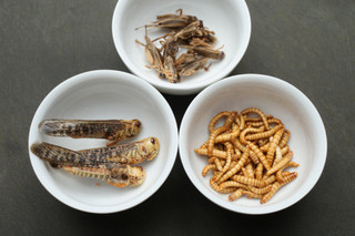 Новый тренд: питание насекомыми