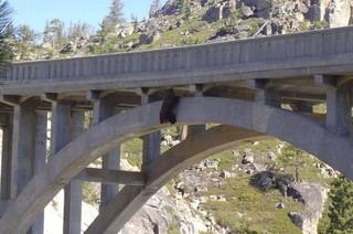 Спасение медведя, застрявшего на мосту