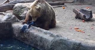 Медведь не дал вороне утонуть