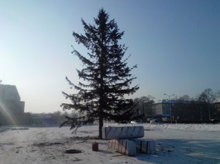 Новогоднюю ёлку установили на главной площади Уссурийска. Опрос