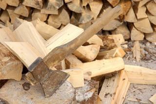 Впервые за последние три года в УГО населению выделен участок для заготовки дров