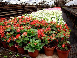 200 000 цветов украсят улицы и скверы Уссурийска