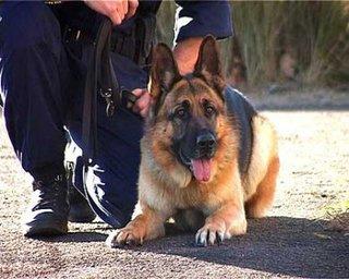 Служебная собака помогла в раскрытии убийства в Уссурийске