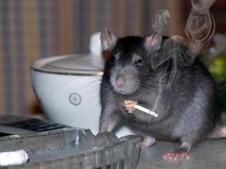 Крысы атакуют дома Уссурийска