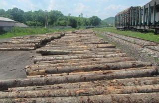 Уссурийской таможней пресечен вывоз древесины