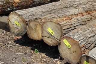 Уссурийской таможней пресечен вывоз древесины стоимостью более 5 млн. руб.