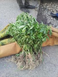 Житель Уссурийска переносил наркотики в завернутом ковре