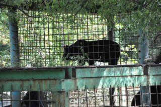 Операция по спасению животных в зоопарке «Зеленый остров» продолжается
