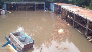 Олень, еноты и козы не вернулись в зооопарк Уссурийска после паводка