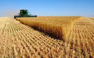 В Приморье убрано уже почти 5 тысяч гектаров сои