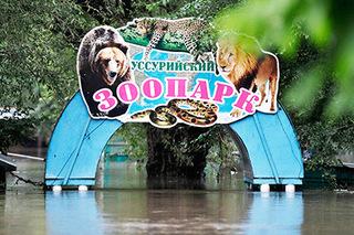 В Уссурийске выбрали Общественный совет для контроля за строительством нового зоопарка