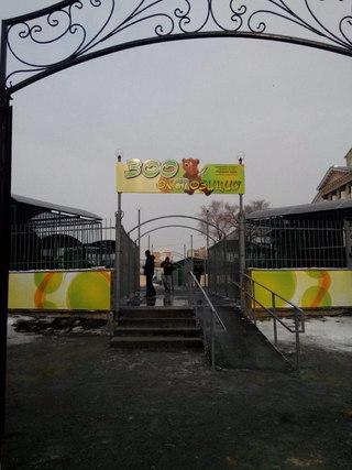 Спасенных зверей из затонувшего зоопарка начали перевозить в новые вольеры